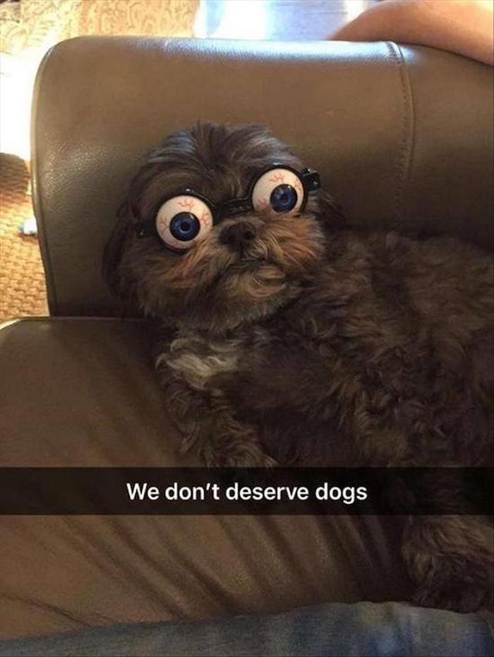 hilarious-animal-picdump-of-the-day-1-03