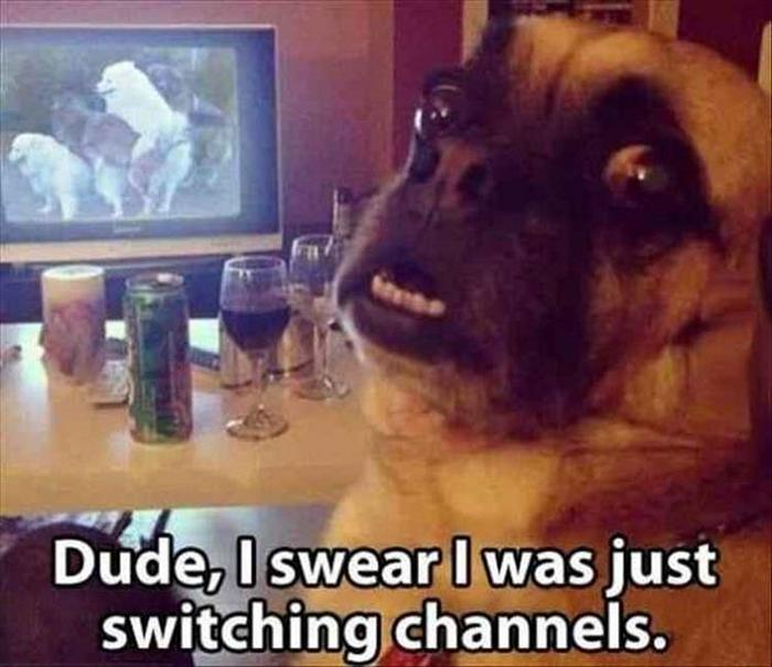 hilarious-animal-picdump-of-the-day-1-13