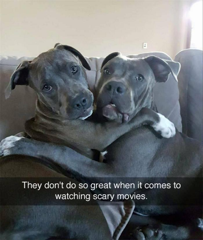 hilarious-animal-picdump-of-the-day-1-15