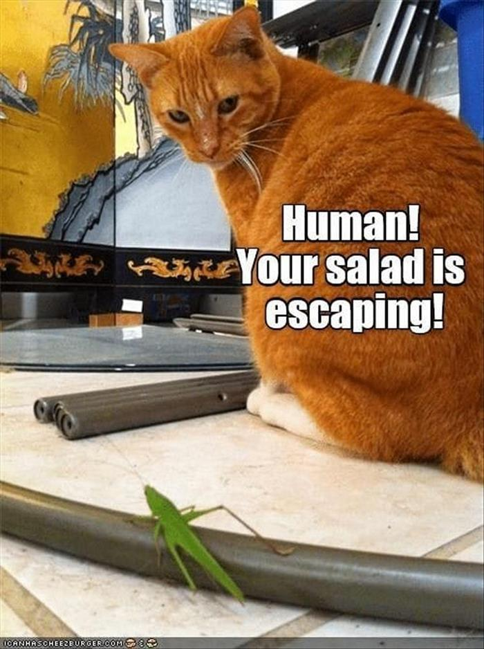 hilarious-animal-picdump-of-the-day-1-20