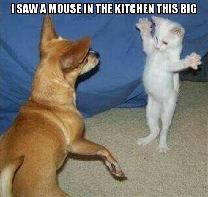 hilarious-animal-picdump-of-the-day-3-21