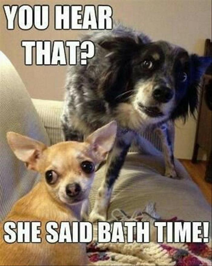hilarious-animal-picdump-of-the-day-3-22