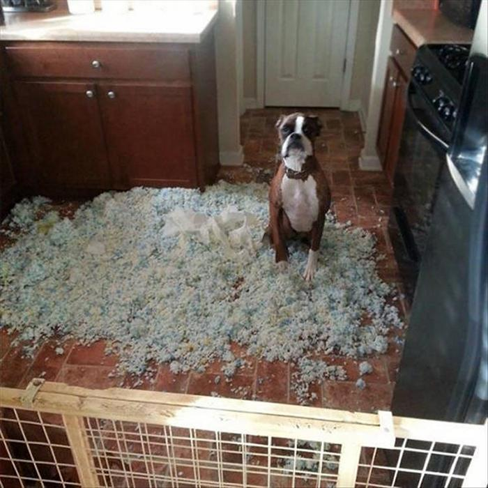 daily-morning-laugh-interest-funny-picdump-of-the-day-7-10