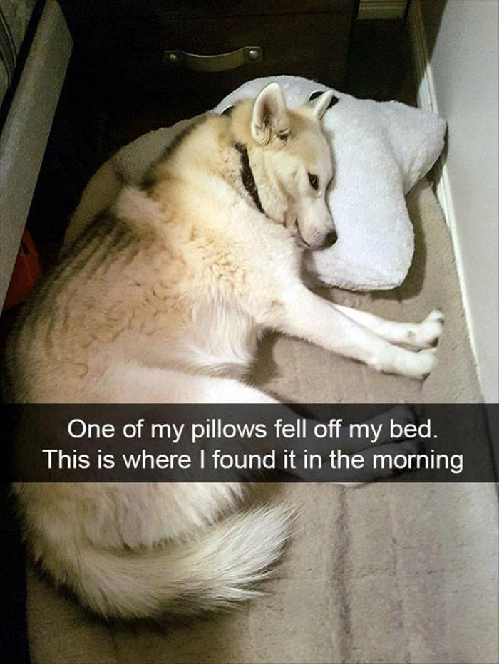 hilarious-animal-picdump-of-the-day-4-17