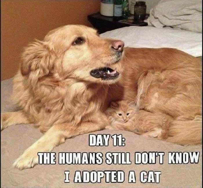 hilarious-animal-picdump-of-the-day-6-13