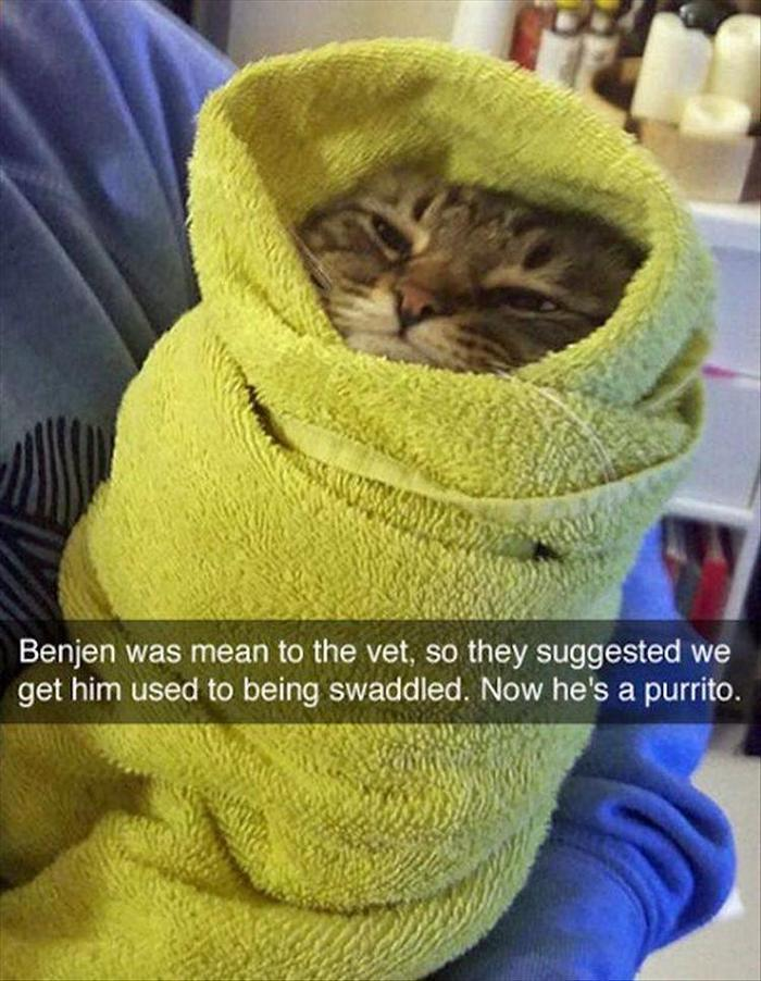 hilarious-animal-picdump-of-the-day-7-09