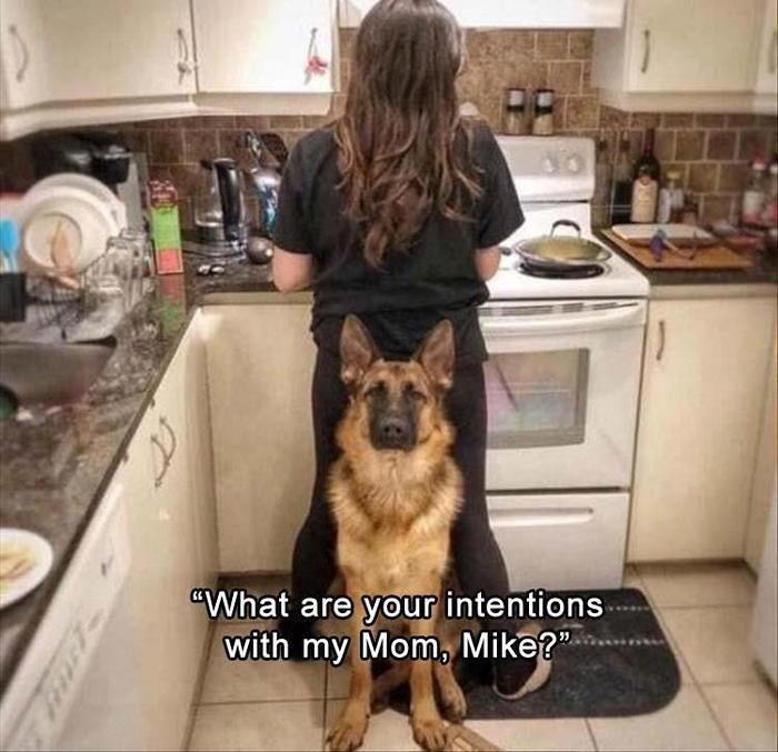 hilarious-animal-picdump-of-the-day-8-14
