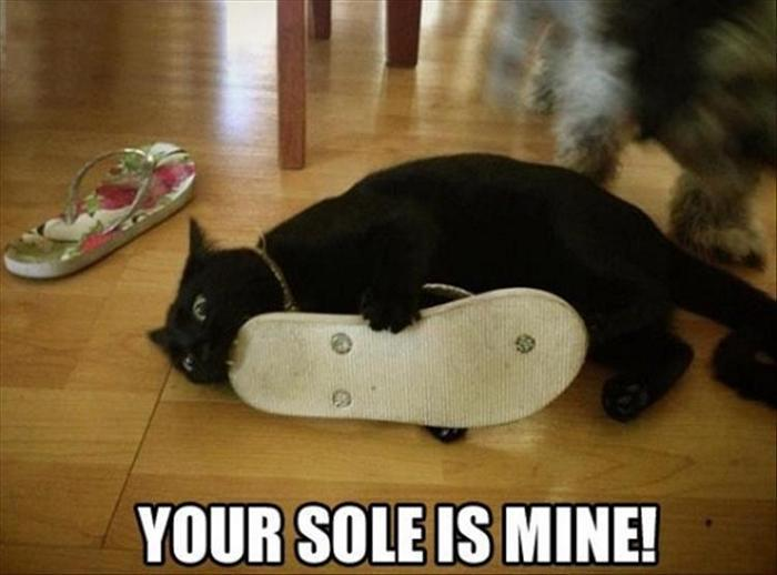 hilarious-animal-picdump-of-the-day-11-12