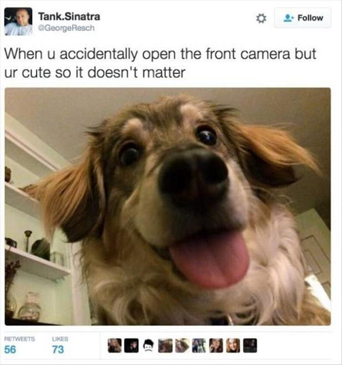 hilarious-animal-picdump-of-the-day-11-15