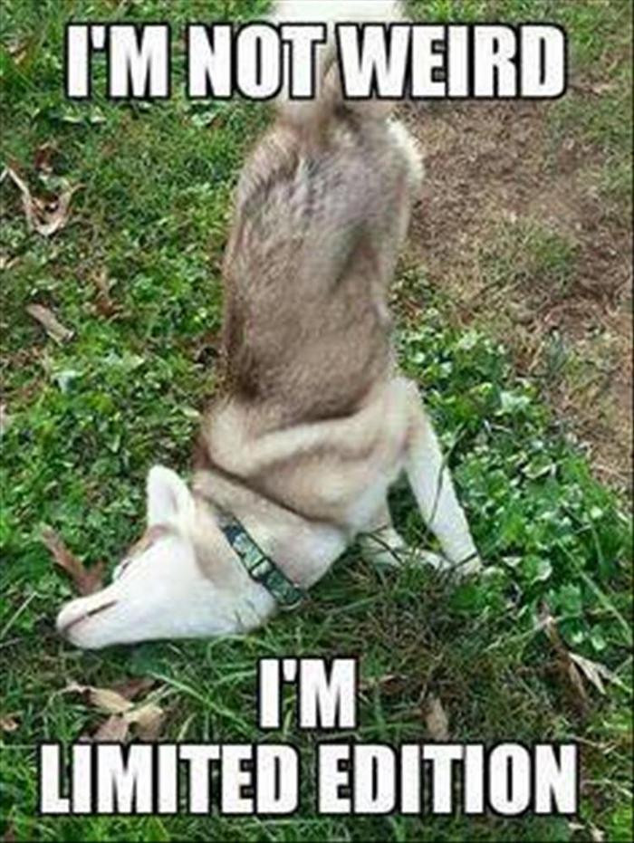 hilarious-animal-picdump-of-the-day-13-10