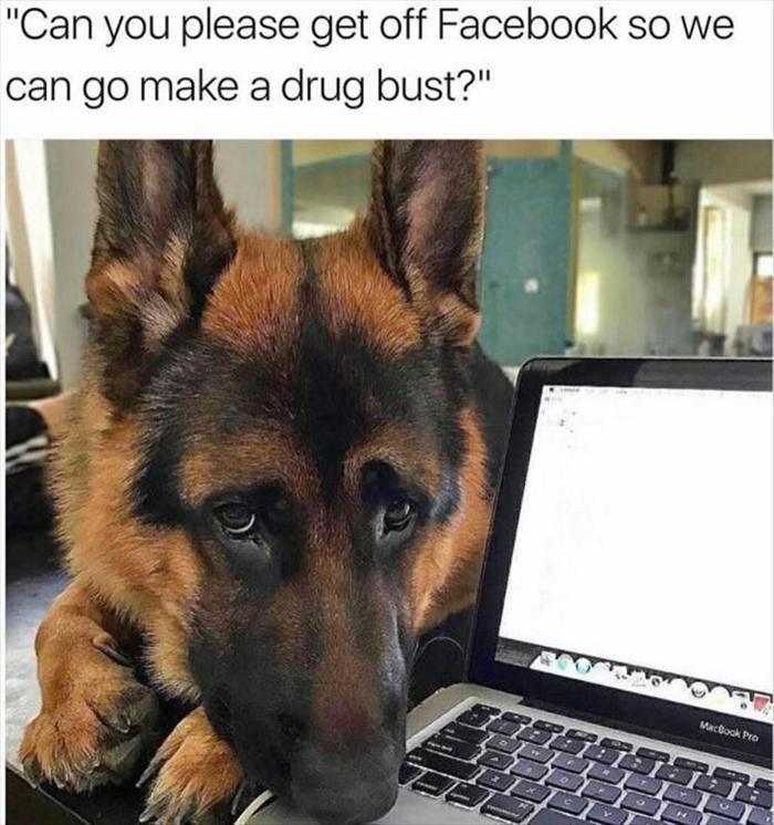 hilarious-animal-picdump-of-the-day-13-12