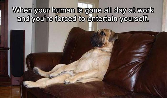 hilarious-animal-picdump-of-the-day-13-14