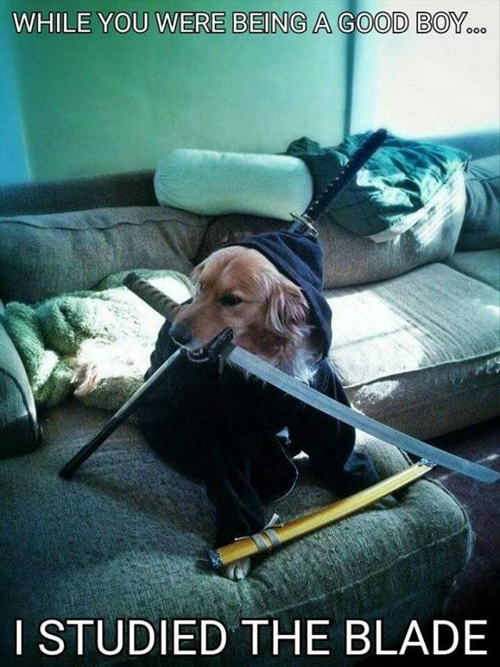 hilarious-animal-picdump-of-the-day-13-22