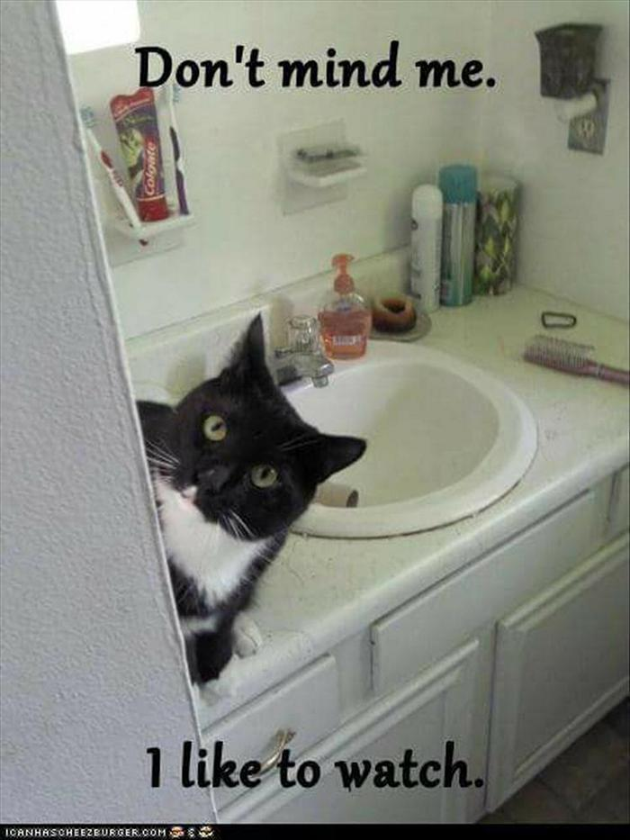 hilarious-animal-picdump-of-the-day-15-09