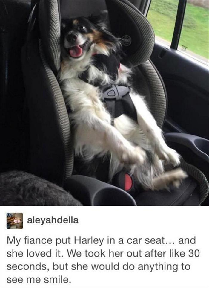 hilarious-animal-picdump-of-the-day-15-15