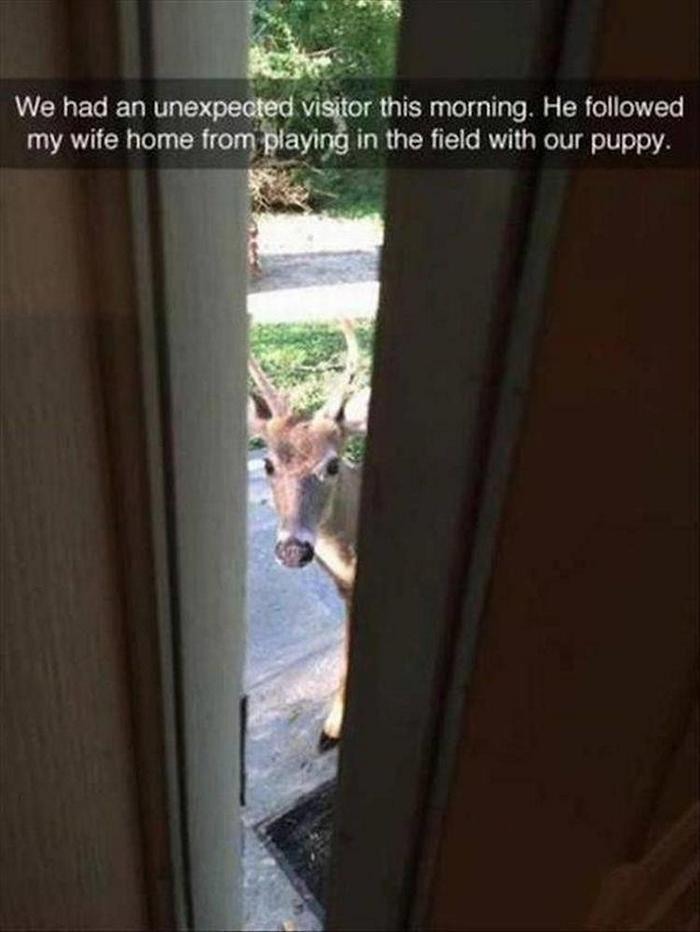 hilarious-animal-picdump-of-the-day-16-17