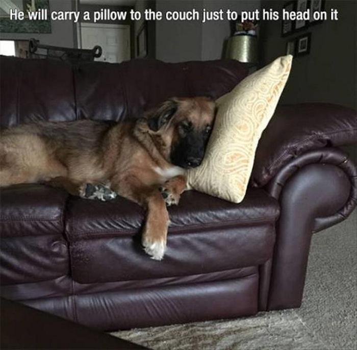 hilarious-animal-picdump-of-the-day-17-08