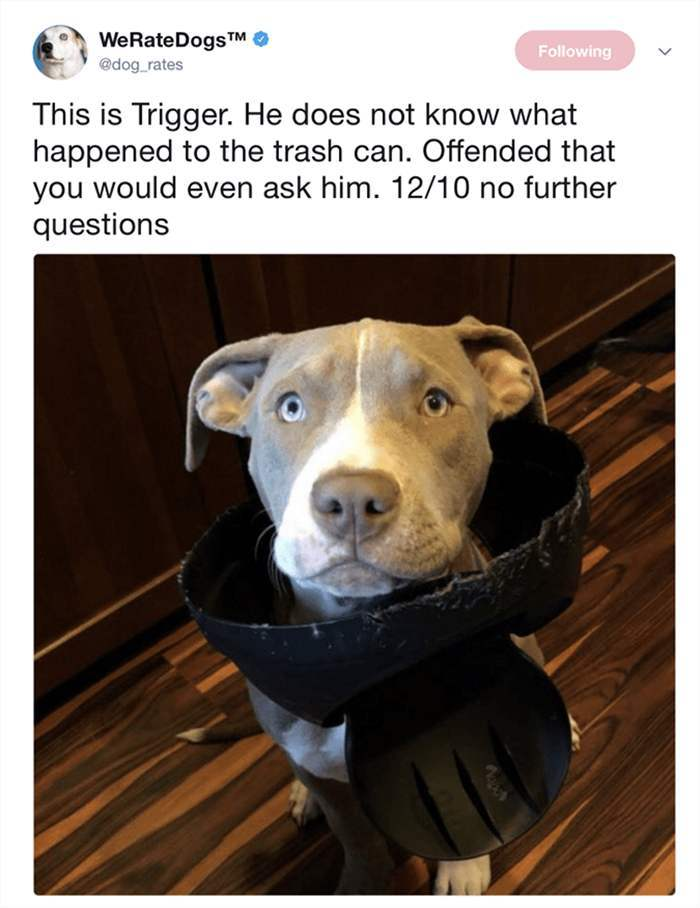 hilarious-animal-picdump-of-the-day-19-11