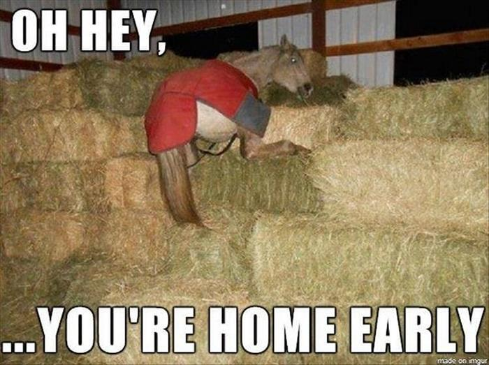 hilarious-animal-picdump-of-the-day-19-15