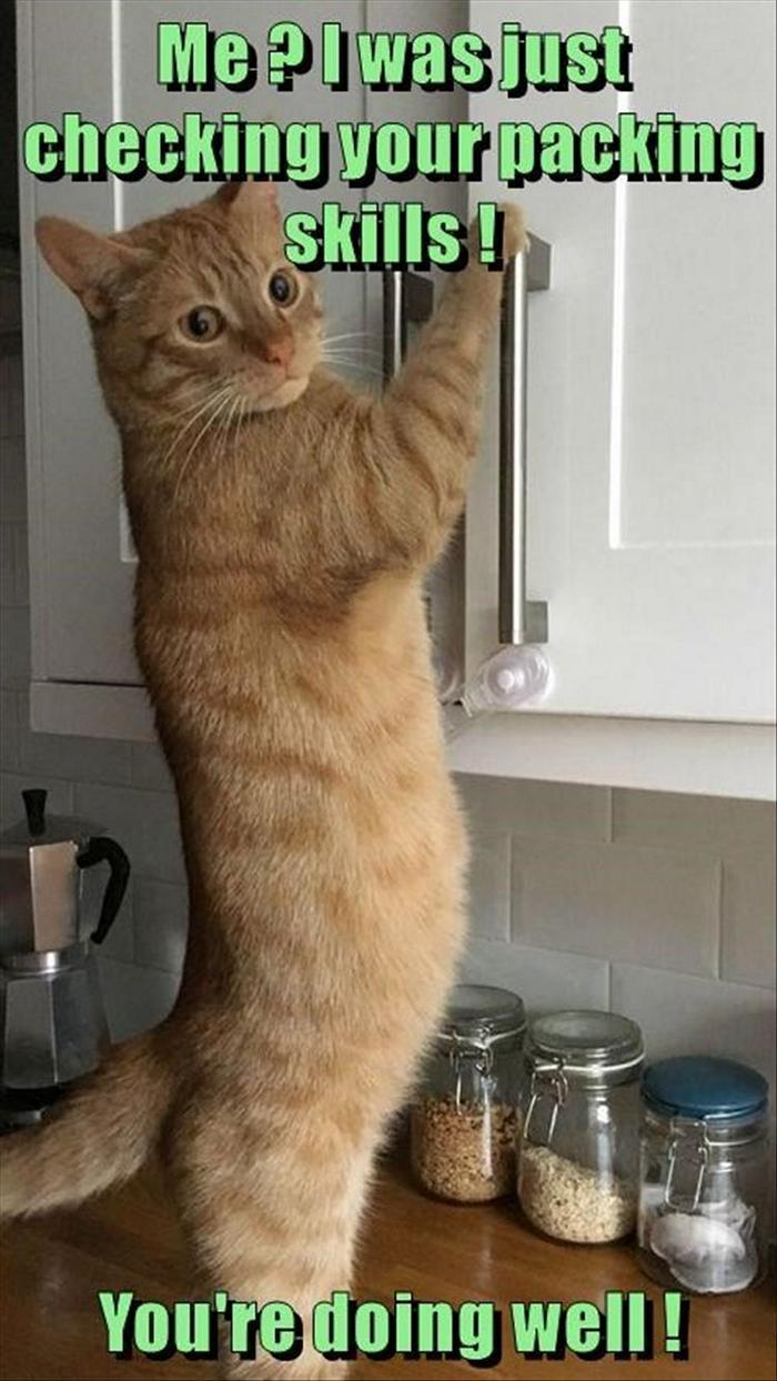 hilarious-animal-picdump-of-the-day-19-18