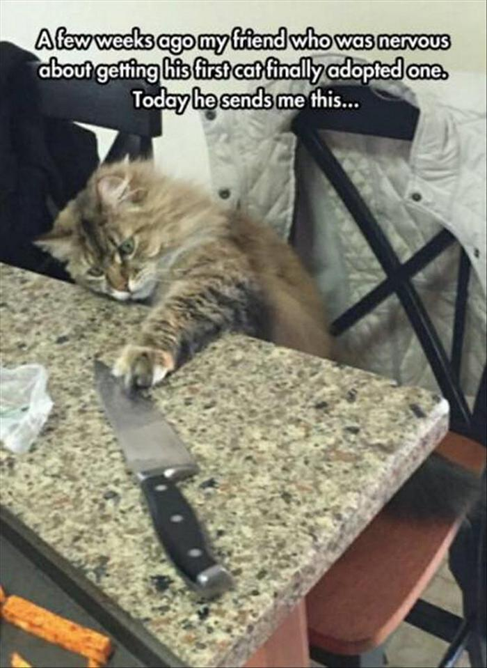 hilarious-animal-picdump-of-the-day-20-21