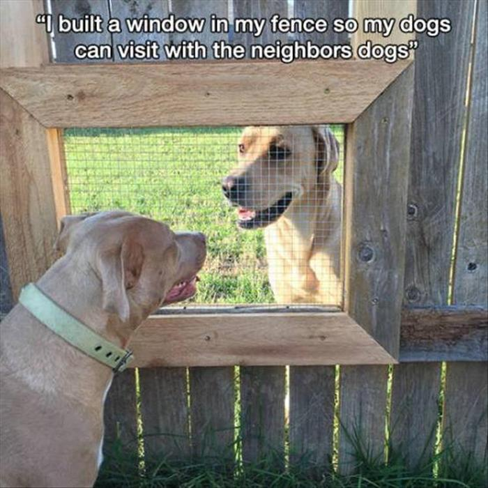 hilarious-animal-picdump-of-the-day-21-10