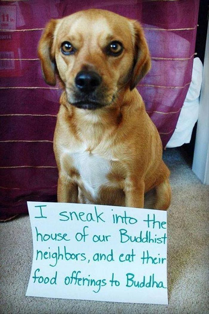 hilarious-animal-picdump-of-the-day-21-11
