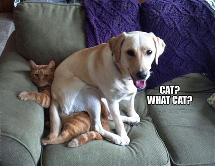 hilarious-animal-picdump-of-the-day-21-18