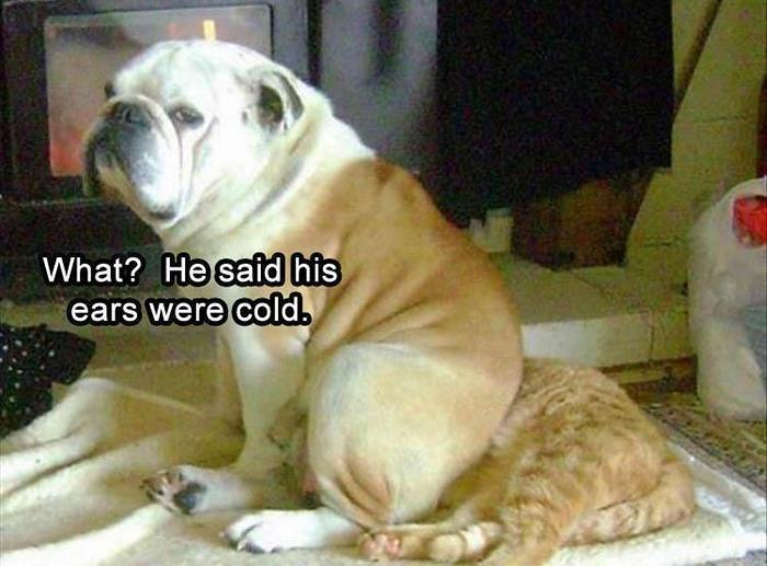 hilarious-animal-picdump-of-the-day-21-19
