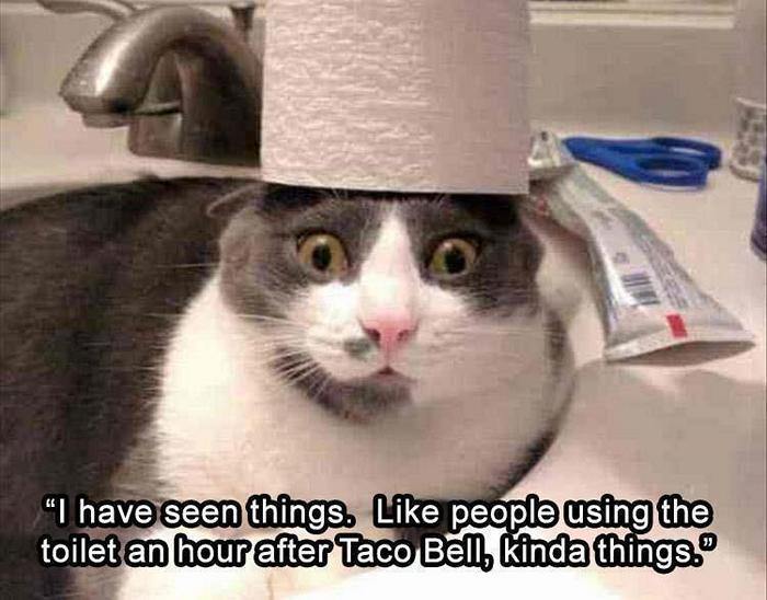 hilarious-animal-picdump-of-the-day-21-24
