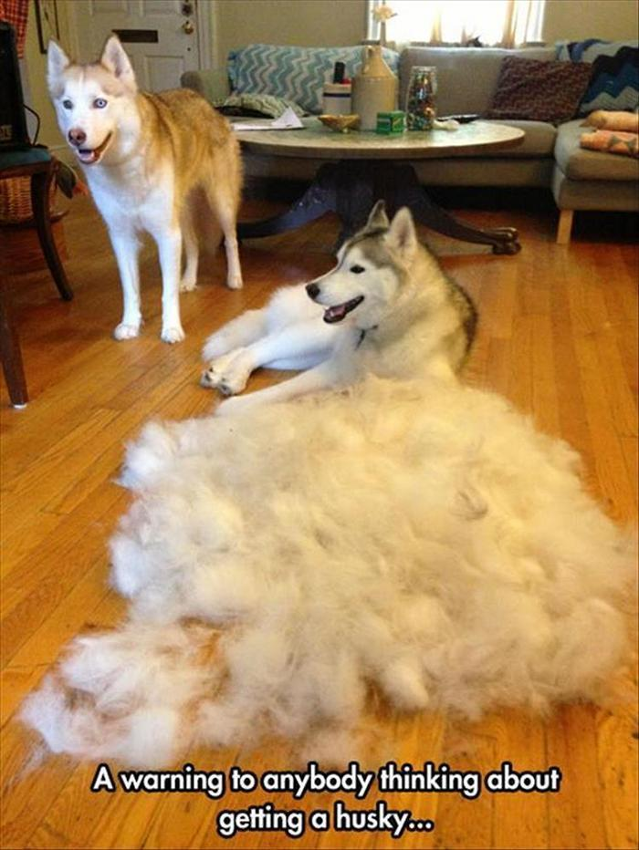 hilarious-animal-picdump-of-the-day-21-26